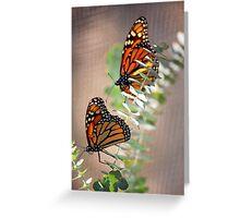 Twin Monarch Butterflies Greeting Card