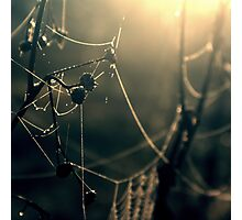 Apple Silk Photographic Print