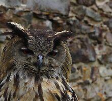 Owl by martrix