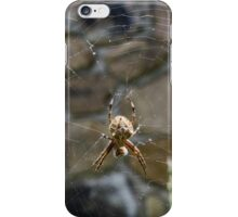 Garden Orb Weaver iPhone Case/Skin