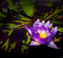 Nymphaea  - Pleasant Day by Mike  Savad