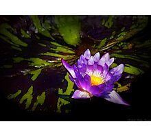 Nymphaea  - Pleasant Day Photographic Print
