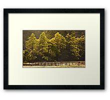 Wattle Colour Framed Print