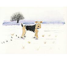 Lakeland Terrier Dog Photographic Print