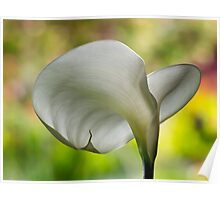 Elegant calla against nature's painted backdrop Poster