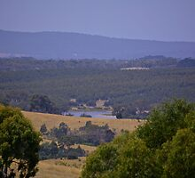 View to  Upper Coliban  Reservior by Jane  mcainsh