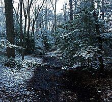 First Snow by DerFuhrer