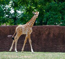 Shorty by Jim Caldwell