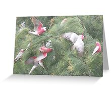 Making a Galah of Themselves # 3 Greeting Card