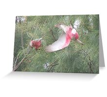Making a Galah of Themselves # 2 Greeting Card