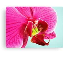 Pink Orchid Textured Canvas Print