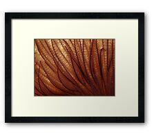 Furry Framed Print