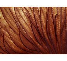Furry Photographic Print