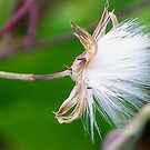 Weeds are beautiful too!! by Kristin Wertman