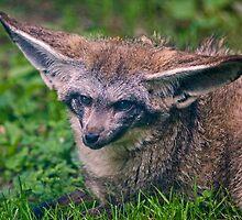 Talk to me!  I'm all Ears! by Krys Bailey