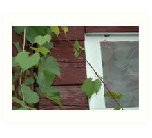 wild grapes Art Print