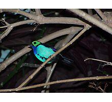 Florida Bird Photographic Print