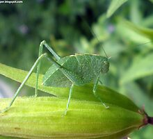Green Bug On A Pod by 1greenthumb