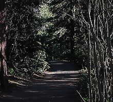 Forests Wonders 2008 by Jymmi Sparkz