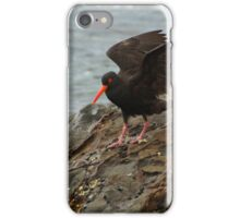 Sooty Oyster-Catcher Landing iPhone Case/Skin