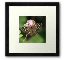 Speckled Wood or Wood Argus Framed Print