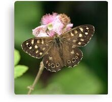 Speckled Wood or Wood Argus Canvas Print
