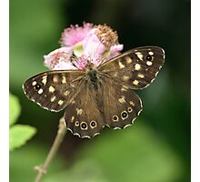 Speckled Wood or Wood Argus Photographic Print