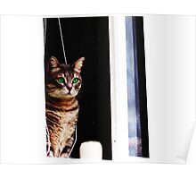 Green Eyed Cat In The Window Poster