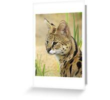 Serval, 2 Greeting Card