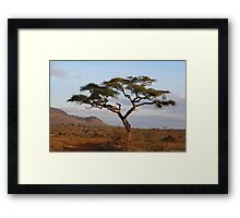 Standing proud in the wilderness Framed Print