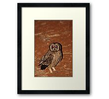 Grass Owl hunting in Tsavo Framed Print