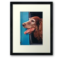 RED IRISH SETTER Framed Print