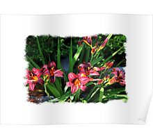 Burgundy Lillies Poster