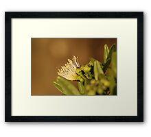 Kenyan Wild Flower Framed Print