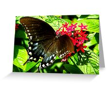 Hungry Swallowtail Greeting Card