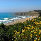 Half Moon Bay by Nikki Collier