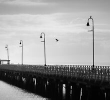 Bird Haven on the Pier by Silken Photography