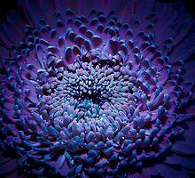 UV Induced Bio-luminescence 8 by AKunde