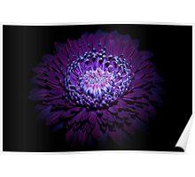 UV Induced Bio-luminescence 10 Poster
