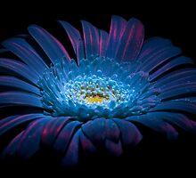 UV Induced Bio-luminescence 12 by AKunde