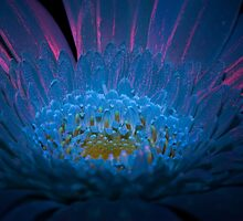 UV Induced Bio-luminescence 13 by AKunde