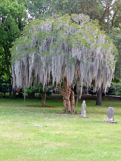 Savannah Graveyard by artgoddess