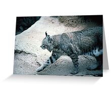 Lynx, 101 views , 1 comment Greeting Card