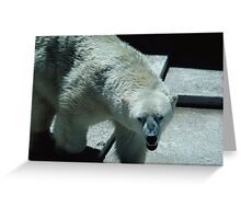 Angry Polar Bear,117 views, 4 comments Greeting Card