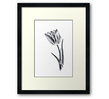 In Light of Beauty (again) Framed Print