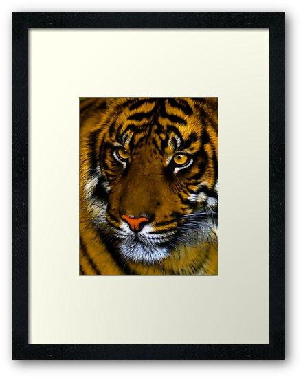 Sumatran tiger by Mundy Hackett
