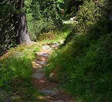 Path by Walter Quirtmair