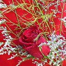 Red Rose Spray by Van Coleman