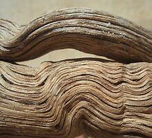 drifted wood by yvesrossetti