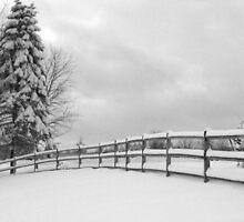 Winter Fence-2 by Judi FitzPatrick